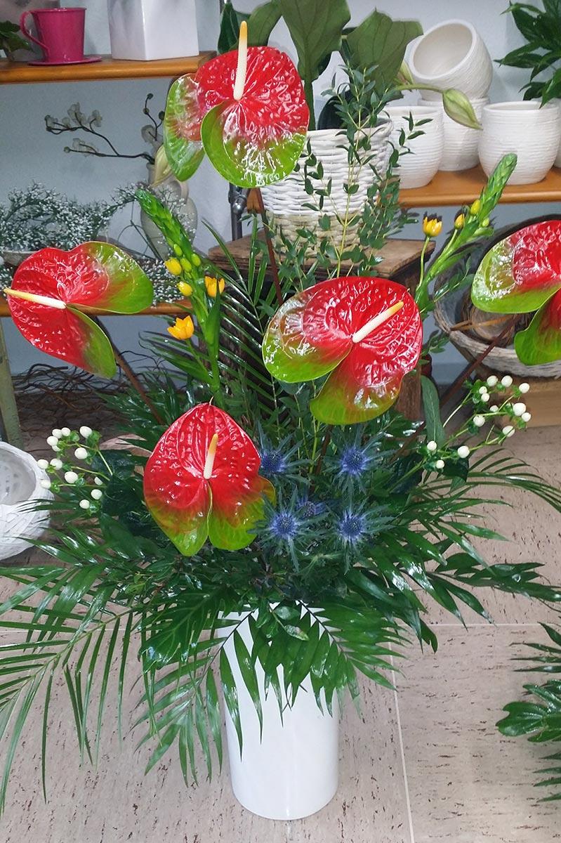 Blumen Pflanze Anthurie