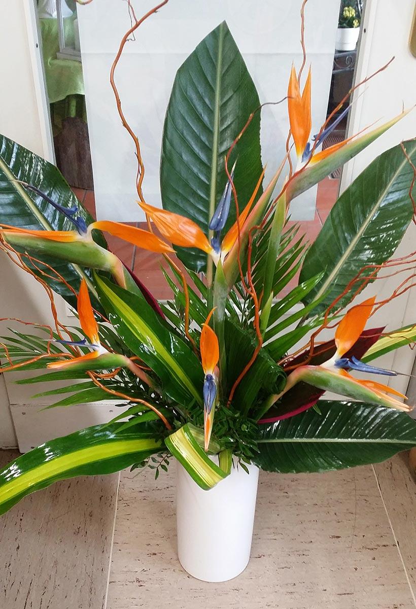 Topfpflanzen Blumen orange Strelitzie